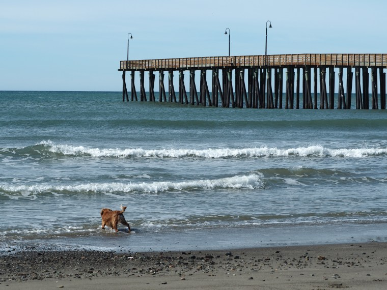 Dog Friendly Beach Cayucos Ca